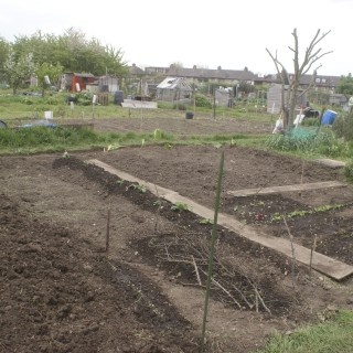 Allotment update: April
