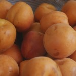 Juicy Belgian apricots