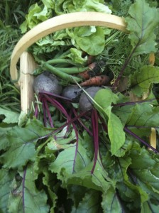 Are you cut out for an allotment?