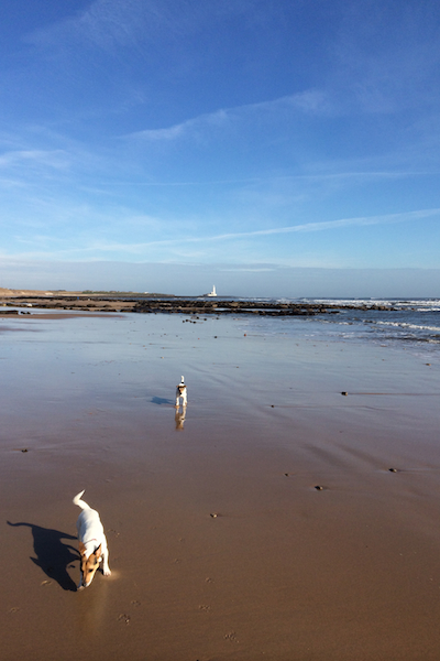 Pixie and Pickle on Whitley Bay Beach