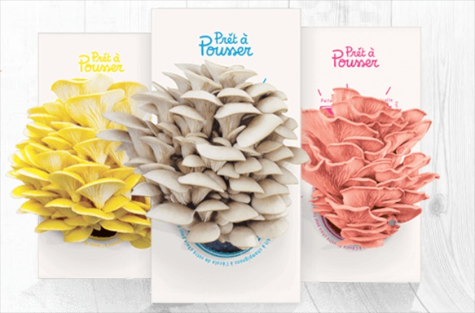 Grown your own mushrooms with pretapousser.co.uk